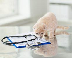 製薬会社への転職を目指す獣医師が知っておくべき市場動向