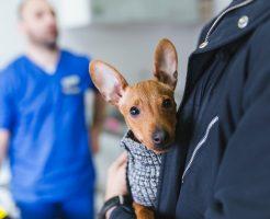 獣医師を募集する製薬会社からの求人